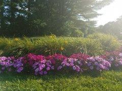 nanticoke-gardens-dorchest-park-2.jpg