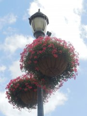 nanticoke-gardens-security-mutual-sponsored-city-of-binghamton-baskets-1.jpg
