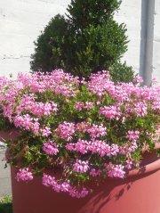 nanticoke-gardens-endicott-washington-ave-2.jpg