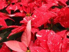 Jingle_Bells_3.jpg