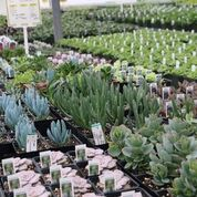 Full line of succulents