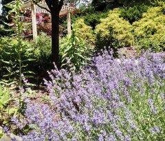 nanticoke-gardens-lourdes-hospital-healing-garden-1.jpg