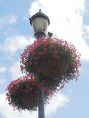 nanticoke-gardens-security-mutual-sponsored-city-of-binghamton-baskets-1.jpg